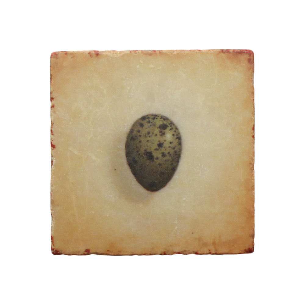 """Hope"" (Crow Egg) Marble Coaster"